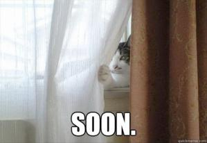 7-soon-funny-cat-stalking-you