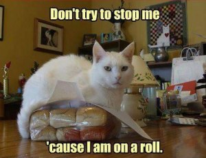 cat-on-a-roll